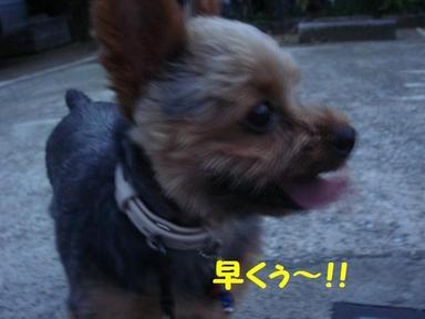 Photo_232